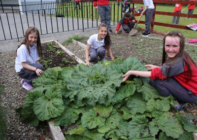 Scoil-Iosaf-School-Garden1