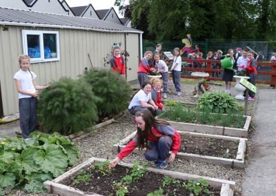 Scoil-Iosaf-School-Garden3